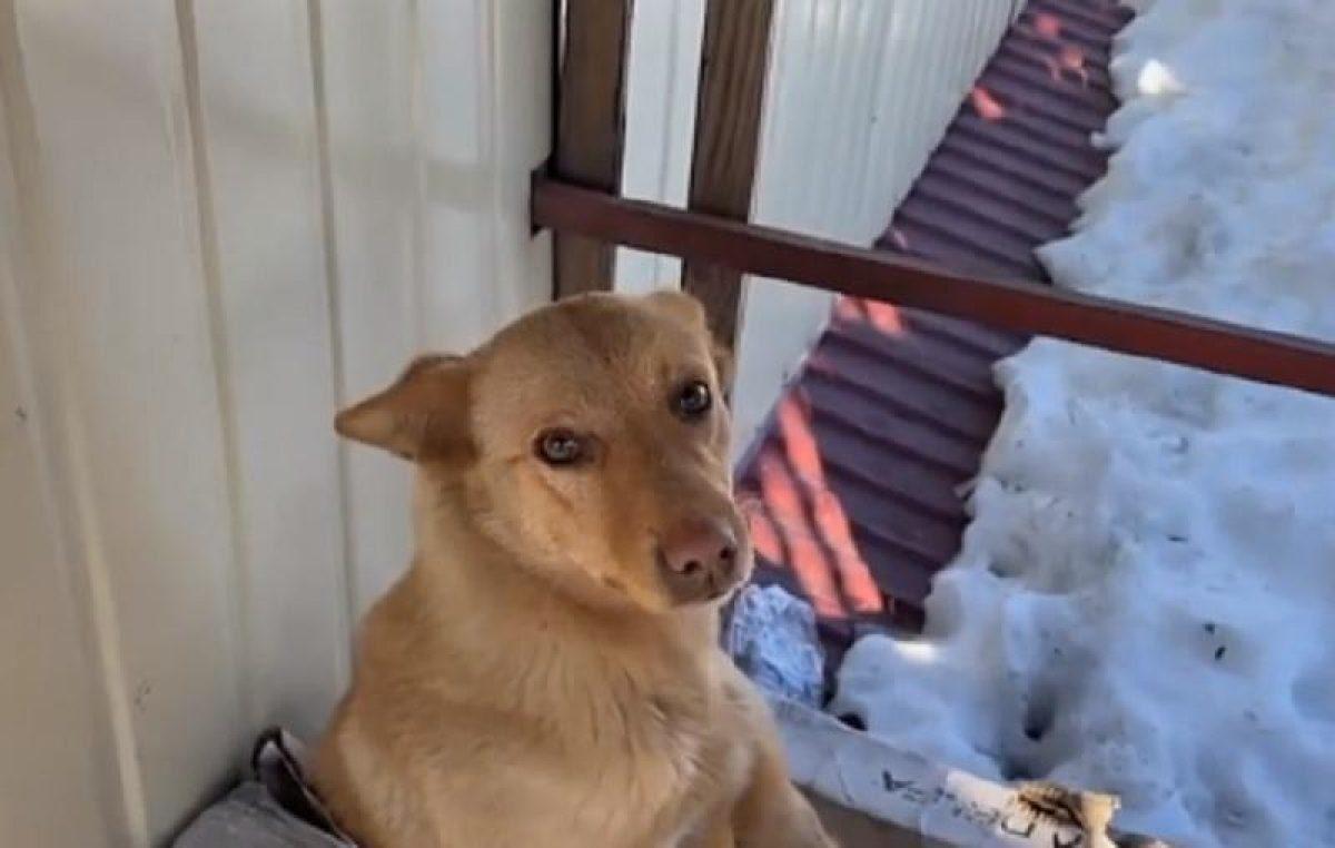 У Сарнах на даху магазину живе собака